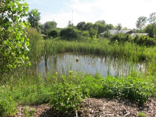 Permaculture pond