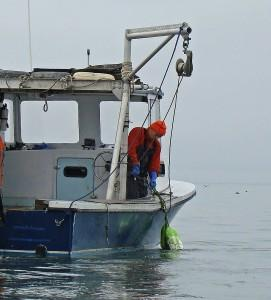 long island sound oystering