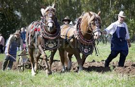horses working