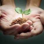hands_sprout_iStock_7221140-300x213
